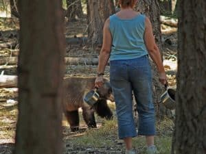 Pots & Pans had no affect for this Black Bear