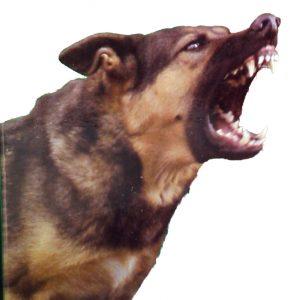 Real Barking Dog
